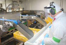 Agrosuper implementa tecnología única en Chile para clasificar garras de pollo