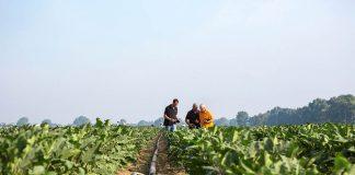 BASF se suma a la celebración del Año Internacional de las Frutas y Hortalizas