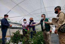 Berries son cultivados bajo invernaderos multipropósitos en precordillera