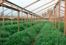 Consejo al agricultor: Por qué utilizar los abonos verdes para mejorar la fertilidad del suelo