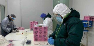 Exportación de Arándanos Frescos: SAG certifica últimos envíos de la temporada