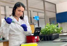 Investigadora chilena desarrolla innovador sistema de PCR para identificación genética de frutales en tiempo récord