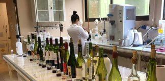 Laboratorio de Microvinificación de Agronomía UdeC retoma funcionamiento para vitivinicultores