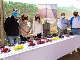 Ministra de Agricultura destacó el trabajo del Consorcio Tecnológico de la Fruta de ASOEX para el desarrollo de frutas 100% chilenas
