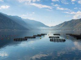 Presentan innovadora tecnología para remediación y mantención de los fondos marinos