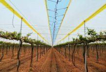 Proteger tus cultivos con films plásticos de baja densidad