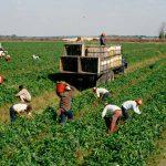En el Consejo de las Américas, expertos piden priorizar a los agricultores en el debate sobre el futuro de los sistemas alimentarios