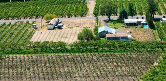 Fruticultores ahorran hasta un 80% en energía eléctrica con plantas fotovoltaicas