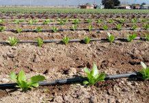 Pequeños agricultores disponen de $1.600 millones en concurso de la CNR destinado a obras civiles y de tecnificación