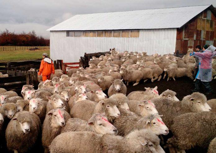 Importante Seminario de actualización de estrategias de fortalecimiento del rubro ovino