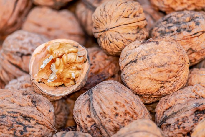 Maulina innova y crea maquinaria para optimizar producción de nueces exportables