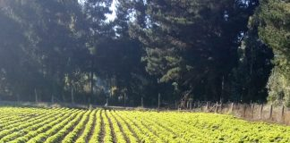 CNR e INIA Carillanca capacitan a agricultores y profesionales de riego en fortalecimiento de la gestión hídrica