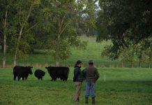 SAG asigna 1.120 millones de pesos a agricultores de la región para mejorar suelos de uso agropecuario