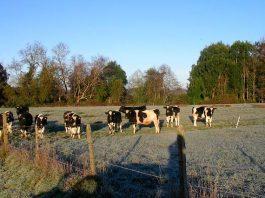 Especialista del INIA entrega recomendaciones para enfrentar eventos climáticos adversos en la ganadería