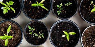 Huerta urbana: Herramienta sustentable que permite acceso más fácil a productos frescos