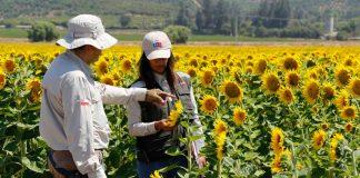 SAG anuncia la fusión de sus divisiones Agrícola y Forestal y Semillas para ofrecer procesos más rápidos y eficientes