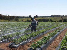 Universidad de Talca realizará webinar sobre Inocuidad Alimentaria y Uso de Plaguicidas