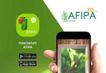 Nueva App te permite reconocer insectos y visualizar en detalle algunos que solo podrías ver con lupa