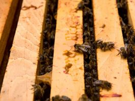 Agricultura Inteligente al rescate de las abejas