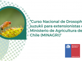 Ministra Undurraga inauguró curso nacional de Drosophila suzukii para funcionarios Minagri