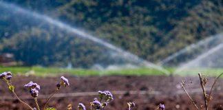 Especialistas en riego de INIA La Platina fomentan colaboración entre Chile y Perú