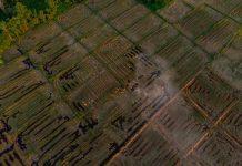 Gobierno impulsa prácticas sustentables para evitar quemas agrícolas en la región Metropolitana