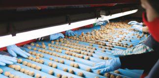 Exportadora sanfelipeña concreta venta de nueces a Turquía gracias a las gestiones de ProChile