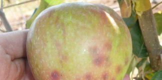 INIA dio inicio a primer curso gratuito de diagnóstico nutricional en frutales y vides