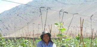 Mujeres agricultoras y de pueblos originarios de Atacama y Coquimbo podrán postular al primer concurso nacional de riego y eficiencia hídricade la Ley de Riego