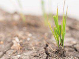 Programa de Recuperación de Suelos Agrícolas Degradados