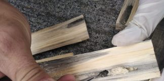 SAG Biobío intercepta importante plaga cuarentenaria en embalaje de madera proveniente del extranjero