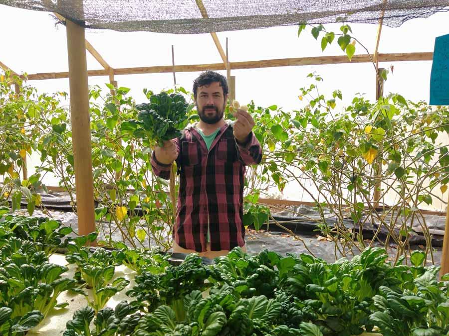 Tatsoi, la planta más popular de Asia también se cultiva en Coquimbo