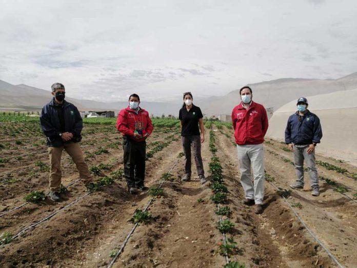 CONADI e INIA renuevan convenio que permite hacer uso eficiente del agua en Alto Azapa