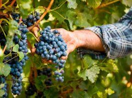 Comenzó ciclo de charlas sobre viticultura y cambio climático