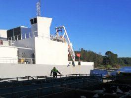 Con nuevo embarque: Chile alcanza los 100 mil bovinos en pie exportados