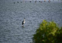 Humedal Parque La Isla reúne a conconinos en la búsqueda de su conservación