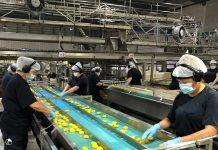 Aconcagua Foods apuesta por diez nuevas variedades de durazno para sus próximas temporadas