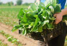 Caso Reverdes: un ejemplo de sustentabilidad y transferencia tecnológica
