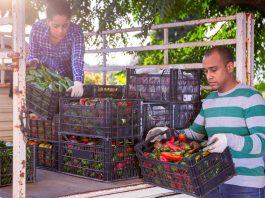 Cumbre de la ONU sobre Sistemas Alimentarios: los países de las Américas alcanzan consensos para que la voz de los agricultores sea escuchada en el foro global