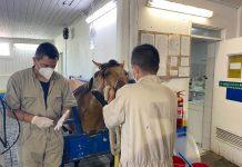 Hospital Veterinario UdeC Chillán y Clínica Veterinaria de Concepción siguen atendiendo mascotas y animales