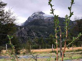 Innovador proyecto en la Región de Aysén busca domesticar calafate y maqui