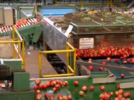 Laboratorio de Postcosecha de INIA La Platina ofrece moderna infraestructura y equipo para investigar aspectos de conservación de productos hortofrutícolas