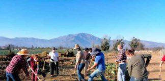 """En el Día de los Campesinos y Campesinas: INIA La Platina realizó Día de Campo en Curacaví para potenciar metodología de """"aprender haciendo"""""""