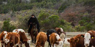Fueron reconocidos en la Ceremonia Virtual del Día del Campesino organizada por INDAP Aysén