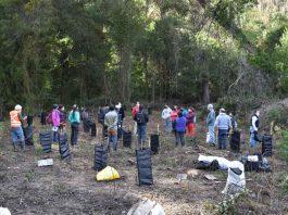 INFOR restaura cuencas de Ñuble con plantación de árboles nativos