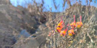 Innti: Devolvemos flora nativa a espacios abandonados