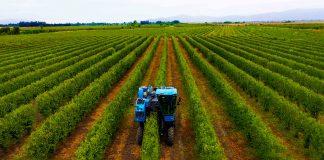 Modelo SES: Sistemas Eficientes y Sostenibles en Alta Densidad marcan tendencia en la industria agrícola