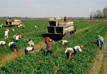 Pandemia y agricultores: viviendo en tiempos de incertidumbre