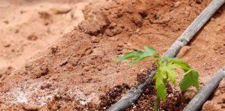 AGRICULTORES ANALIZAN RETOS Y OPORTUNIDADES QUE OFRECE EL CAMBIO CLIMÁTICO
