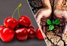 Global Cherry Summit y Agricultural Water Summit se postergan hasta 2022 Ambos eventos se han pospuesto debido a la extensión de alerta sanitaria y las restricciones relacionadas con la pandemia de Covid-19. Las nuevas fechas se darán a conocer próximamente.